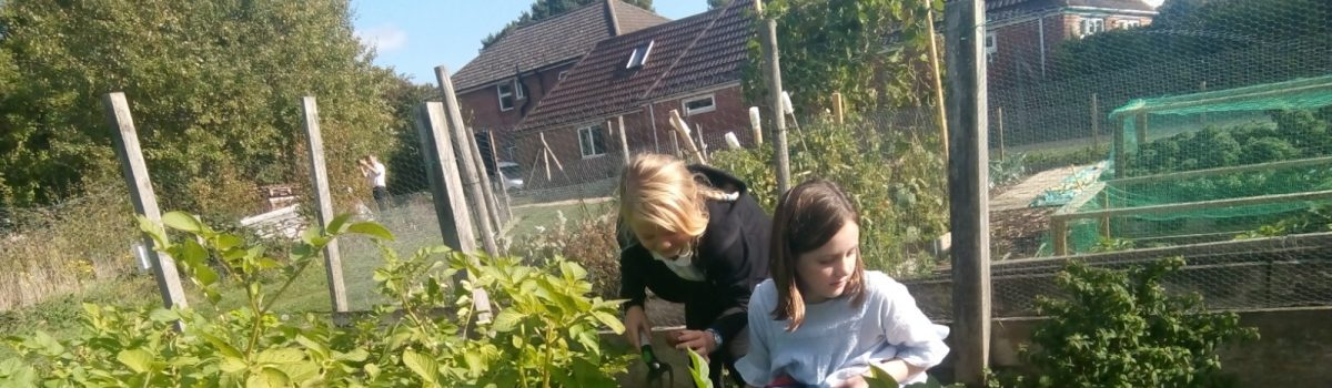 Year 3 – Allotment Visits